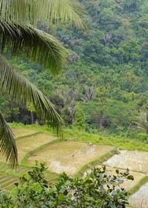 La agricultura tradicional se basa en creencias y tradiciones en Sumatra. Foto: Universidad de Kent.
